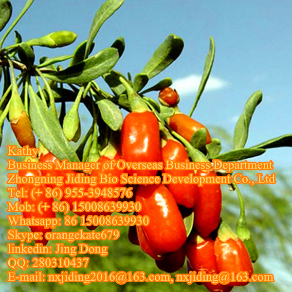 Goji berry supplier
