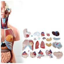 ANATOMIA de TÚNICA 12018 Plástico 23 Peças 85 cm Biological Meio Corpo Dual-Sex Modelo de Tronco de Plástico Médico