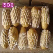 горячая продажа свежий Голландия экспортер patato