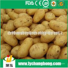 2014 Best seller high quality fresh potato 80-150g/100-200g/200g up