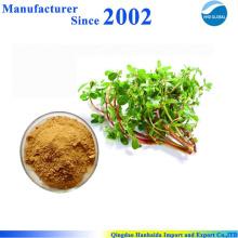 Fornecimento de fábrica GMP alta qualidade pura natureza Portulaca Oleracea Extrato, Portusana Purslane Extrato
