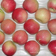 Pomme de gala rouge fraîche chinoise de Orchard à votre entrepôt
