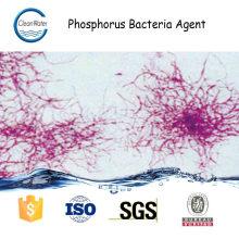 Agent de bactérie de phosphore Traitement des eaux usées municipales de l'enzyme