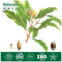 Best Quality Ratio Herb Extract-Agrimony Extract