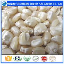 Heißer Verkauf & heißer Kuchen hoher Qualität Weißer Mais mit angemessenem Preis und schneller Lieferung !!