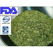 Rico sabor antioxidantes únicos té verde sencha