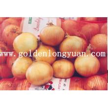 Oignon jaune frais