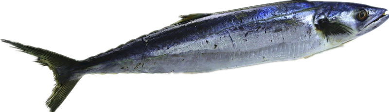 Spanish Mackerel in Good Taste