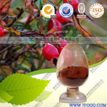 Health Care Produkt Hohe Qualität 100% natürliche Hagebutte Extrakt