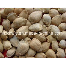 Amêndoa doce em Shell (longwangmao 15-17mm)