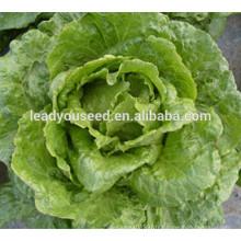 MLT07 Licui haute résistance à la chaleur des graines de légumes de laitue chinoise