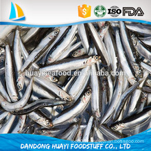 new arrival best quality frozen fish anchovy with competitive price