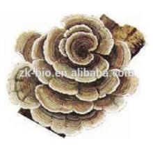 Extrato de cogumelo em pó coriolus versicolor polissacarídeo