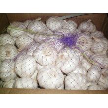 Chinesisches frisches normales Weiß 6.0-6.5cm Knoblauch