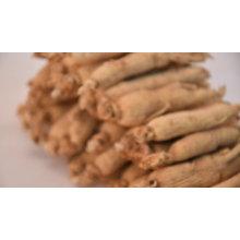 China wholesale Bulk Panax Ginseng P.E.Ginseng hongkong ginseng root price