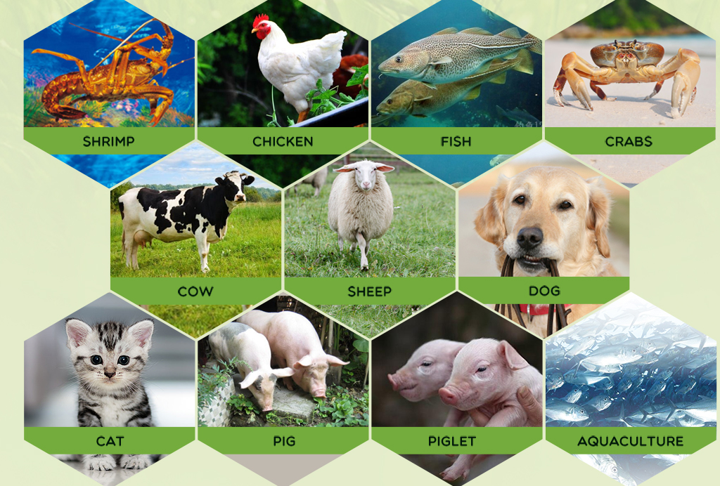 feed grade additives for animal