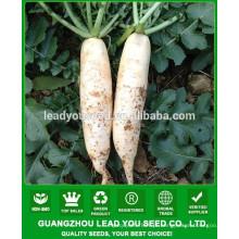 NR01 Norma Qualidade sementes de rabanete