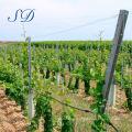 Galvanized Vineyard Poles Grape Stake Post