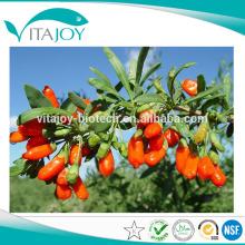 Polvo de jugo de Goji orgánico de alta calidad en stock con entrega rápida