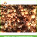 Cebola fresca de alta qualidade de tamanho 5-7cm