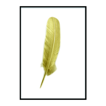 Art feather  display frame
