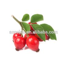Fabricante fornecer alimentos grau orgânico rosehips frutas extrato