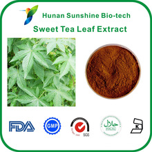 light yellow powder sweet tea leaf extract