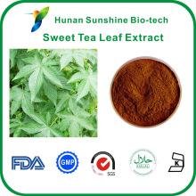 экстракт светло-желтого порошка сладкого чая листьев
