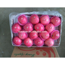 Alta calidad Fresh Red Fuji Apple