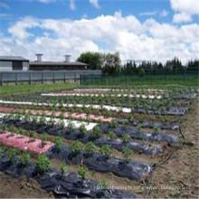 Géotextiles tissés par pp de tissu tissé par pp comme tapis de lutte contre les mauvaises herbes / barrière de mauvaises herbes / sol tissé.