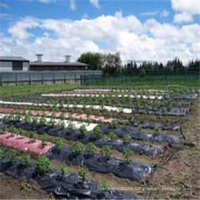 PP Woven Fabric PP Woven Geotextiles as Weed Control Mat /Weed Barrier/Woven Ground.