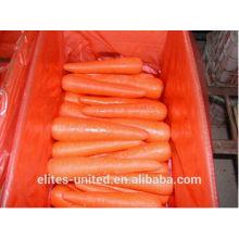 Best quality fresh carrot price
