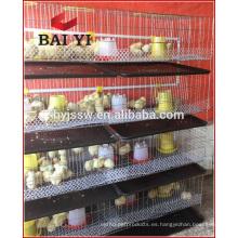 Jaula de pollos de granja de aves de corral de venta caliente para pollitos de 1 día de edad