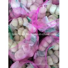 Neuer Ernte frischer normaler weißer Knoblauch 3p / 10kg Beutel oder Karton
