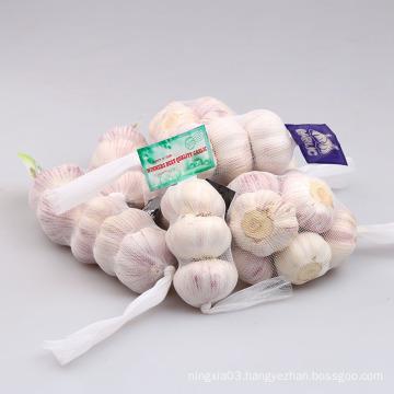 5.5 cm Factory Pure White Fresh Garlic Price/ bulk garlic for sale/ garlic from China