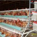 Diseño de jaula de pollo en capas para cobertizo de aves de corral de granja