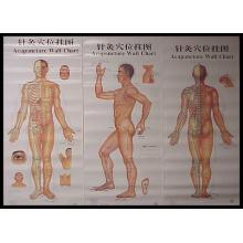 La nouvelle carte murale d'acupuncture (V-1)