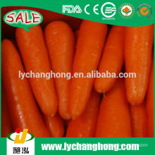 2014 New Crop Fresh Red Carrot Supplier From China