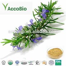 Bom Preço Ácido Carnosico 20% -60% de Extrato de Alecrim