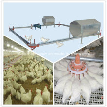 Layer Breeding Poultry Equipment