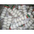 Nova Colheita Fresca Boa Qualidade Exportação Alho Branco
