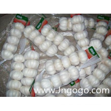 Nueva cosecha Fresh Good Quality Export White Garlic