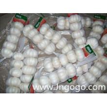Nouvelle récolte fraîche bonne qualité exportation ail blanc
