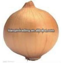 regular fresh onion