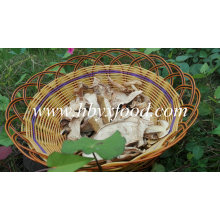 Botón blanco seco Seta de Porcini con precio de mercado