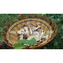 Cogumelo Porcini Branco Seco Com Preço De Mercado