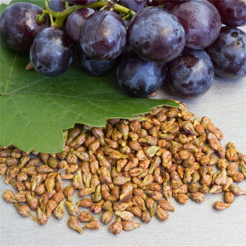 grape seed1