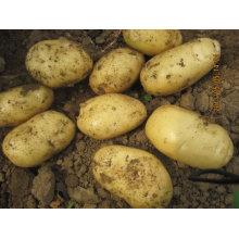 2013 fábrica de patatas frescas