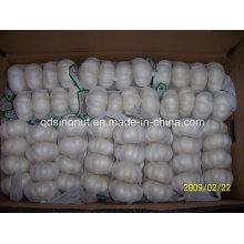 Nova colheita de alho branco fresco 200g 250g