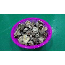 Shiitake getrockneter hochwertiger glatter Pilz